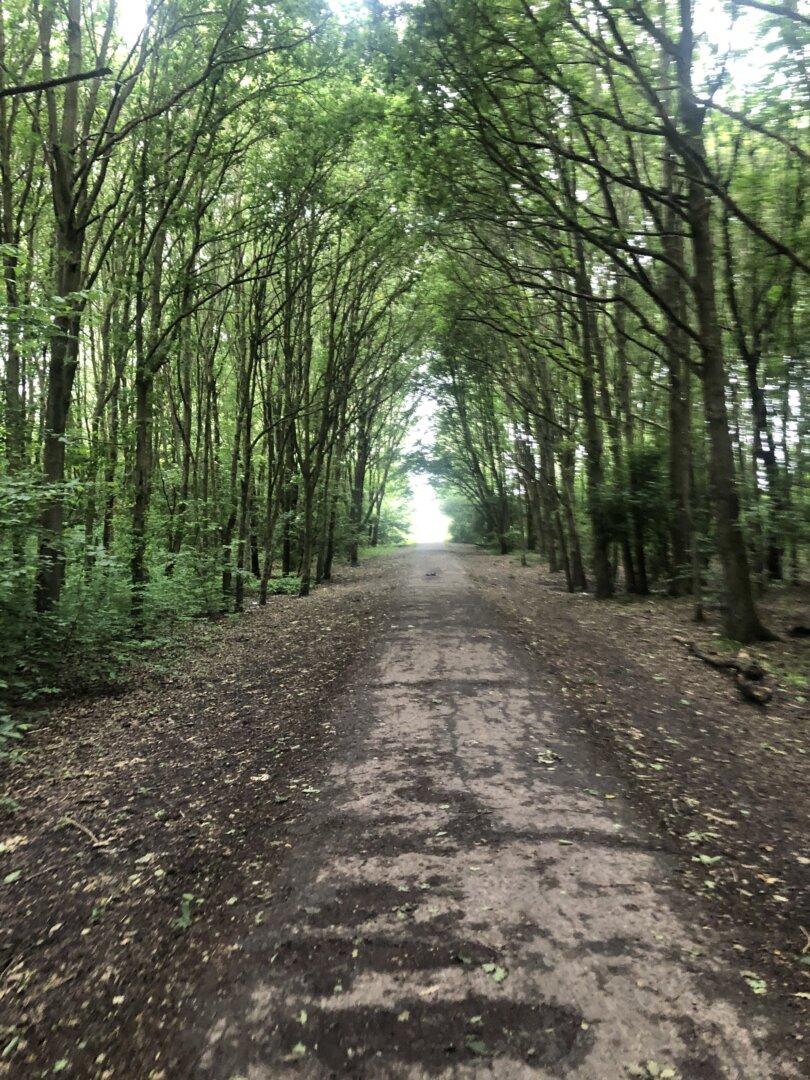 wandeling door het bos maken