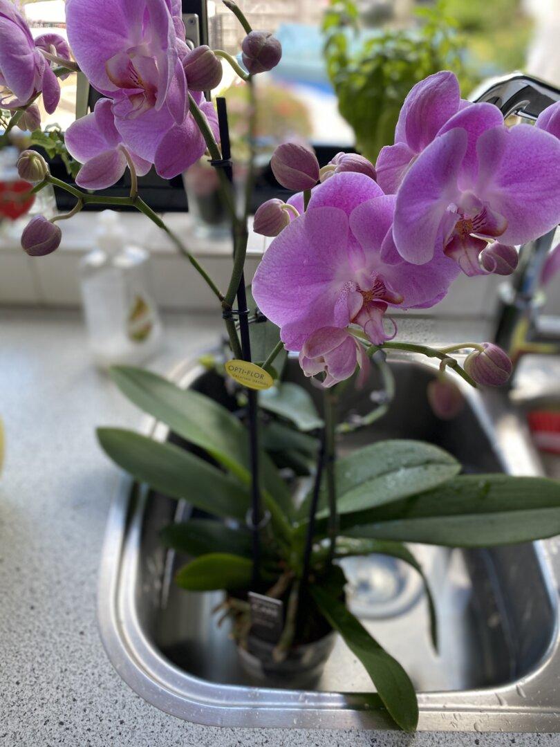 badje voor mijn orchideeën